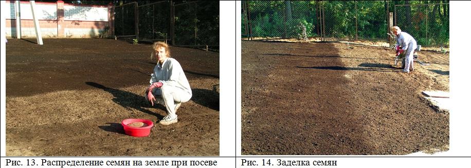 Как сажать семена травы для газона 79