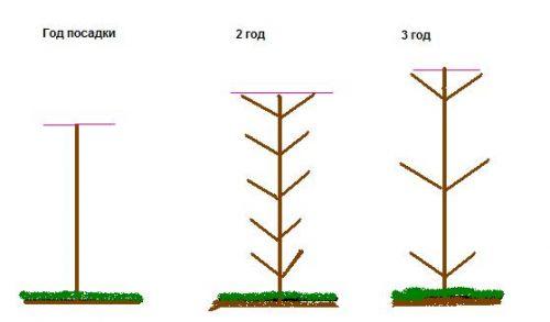 Схема формирования колоновидных