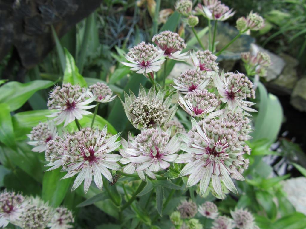 Каталог многолетних растений для сада